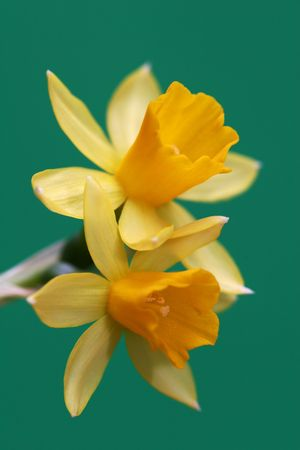 yelloow: yellow flower on green background