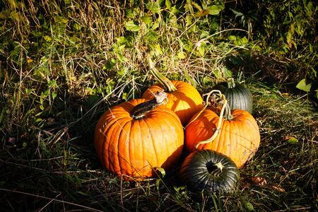 shot of pumpkins on the ground in afternoon sunlight Stock Photo