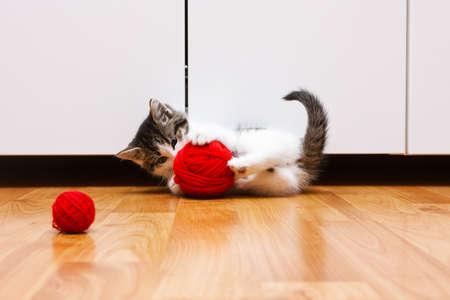 gato jugando: Muy lindo gatito jugando con una bola roja del hilado Foto de archivo