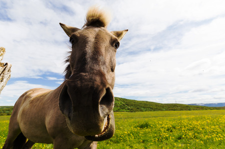 wide angle lens: Horse looking at camer making a funny face, shot with a wide angle lens close up