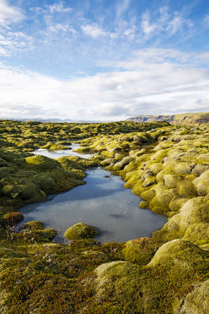 moss: Moss grown lava field in southern Iceland, small stream flowing through it