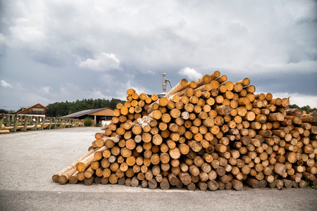 Pile of logs in a lumber yard waiting for further processing