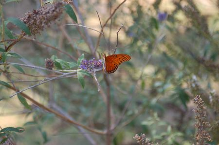 butterfly on bush