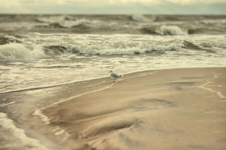 icily: a seagull