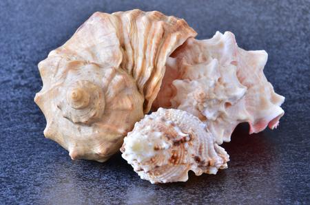 souvenirs: sea souvenirs