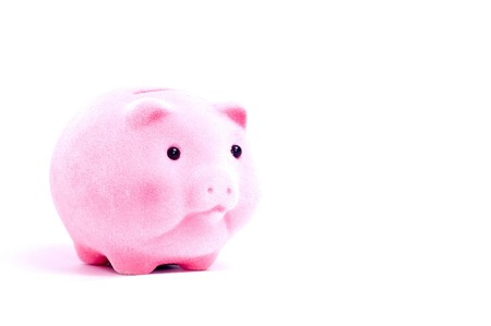 Small pink pig with money isolated on white photo