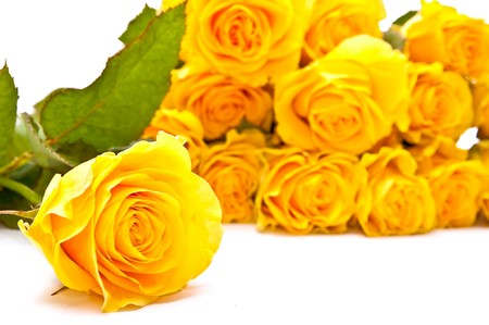 One and bunch of yellow roses on white background. photo