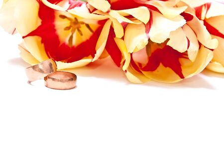 Yellow with red tulips with wedding rings isolated on white photo