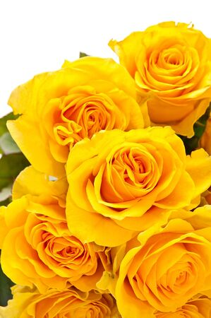 Bunch of yellow roses isolated on white background photo