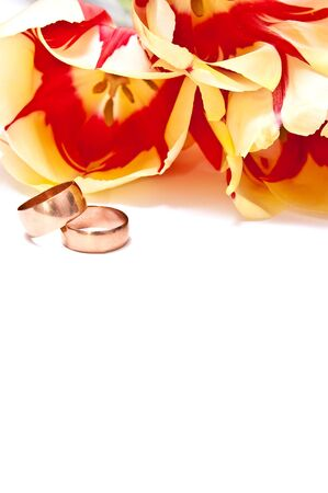 Yellow tulips with wedding rings isolated on white photo
