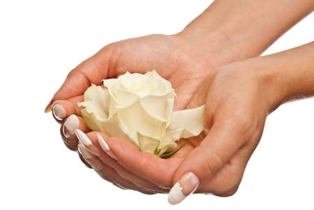 White rose in womans hands. Studio shot photo