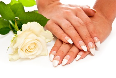 Hands with manicured nails and rose. White background photo