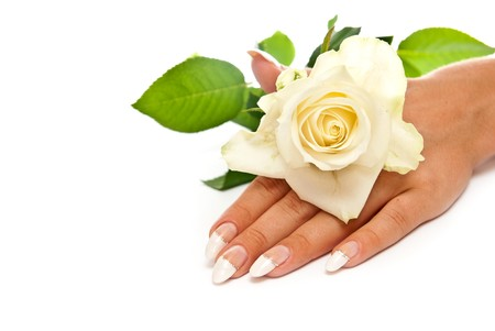 Hand with manicured nails and rose. White background photo