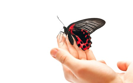Black and red butterfly on mans hand. Studio shot photo