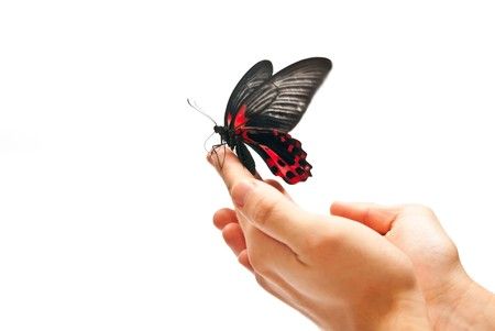 Black and red butterfly on mans hand. In motion Stock Photo