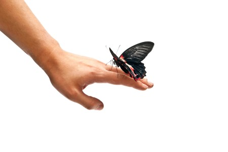 Black and red butterfly on mans hand. In motion photo