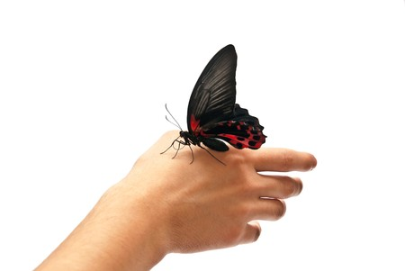 Black and red butterfly on man's hand. Isolated on white Stock Photo - 8152508