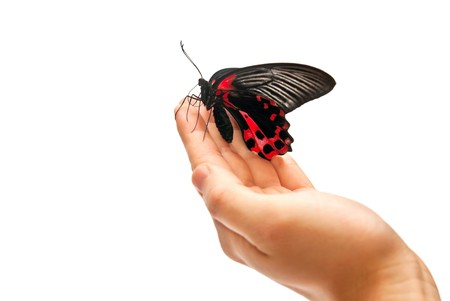 Black and red butterfly on mans hand