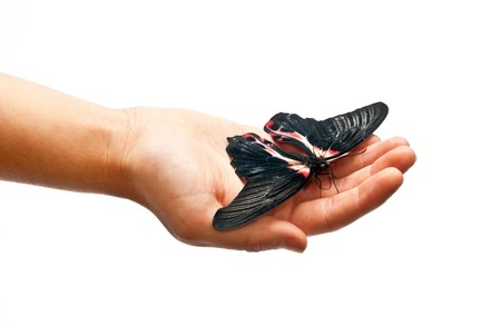 Black and red butterfly on man's hand Stock Photo - 8152511
