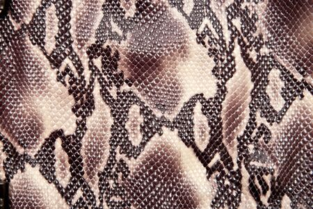 Texture backgroun brown snake leather photo