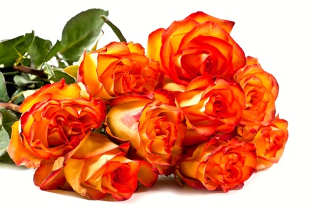 orange rose: Yellow with red roses isolated on white