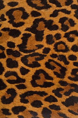 animal print: A printed representation of the beautiful markings of a leopard skin Stock Photo