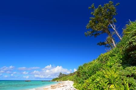 Beautiful subtropical Okinawa Stock Photo - 15103175