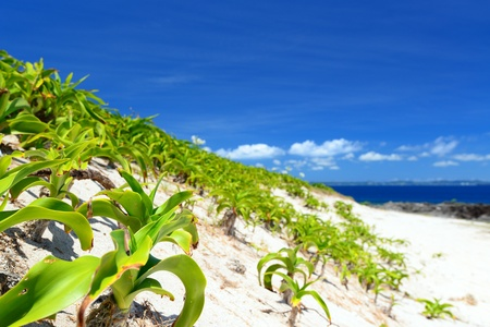 Summer sky and the green of the Okinawa subtropical plants Stock Photo - 15103167