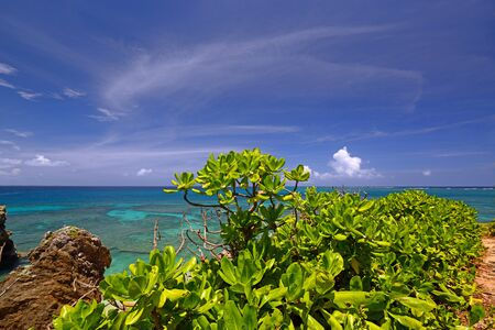 subtropical plants: Summer sky and the green of the Okinawa subtropical plants Stock Photo