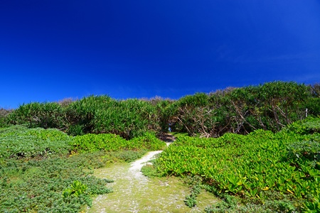 Beautiful subtropical Okinawa photo