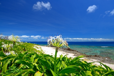 Summer sky and the green of the Okinawa subtropical plants photo