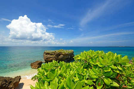 Beautiful subtropical Okinawa Stock Photo - 15243034