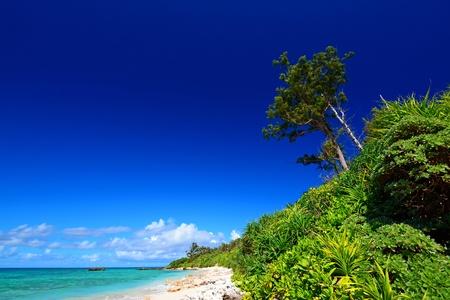 Beautiful subtropical Okinawa Stock Photo - 16032837