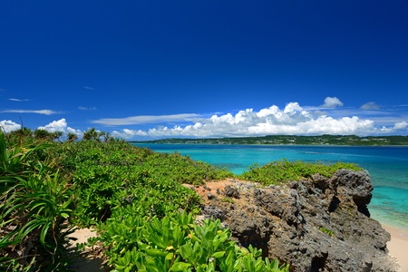 Summer sky and the green of the Okinawa subtropical plants Stock Photo - 17329779