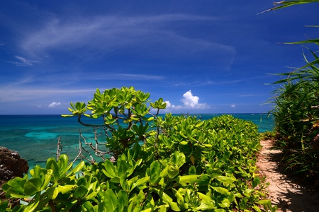 Beautiful subtropical Okinawa Stock Photo - 18025785
