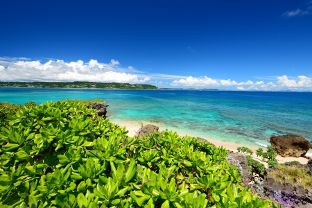 Summer sky and the green of the Okinawa subtropical plants Stock Photo - 18233230