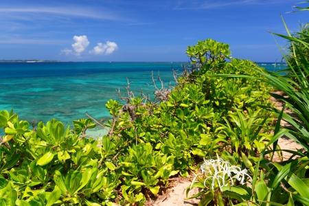 Beautiful subtropical Okinawa Stock Photo - 18895363