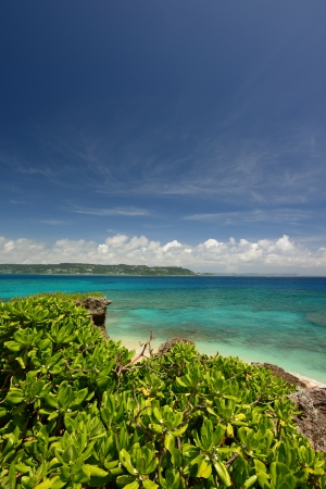 subtropical: Summer sky and the green of the Okinawa subtropical plants Stock Photo