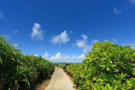 subtropical: Beautiful subtropical Okinawa