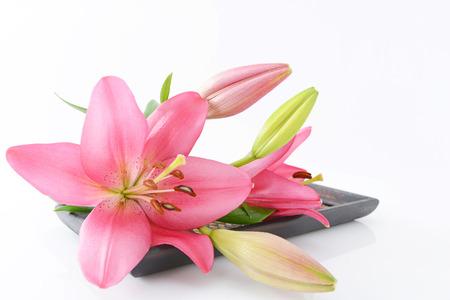 12288;Beautiful and cute full bloom flower photo