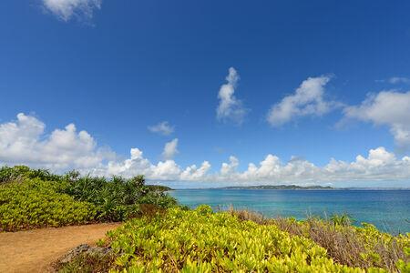 subtropical plants: Blue sky and subtropical plants of Okinawa Stock Photo