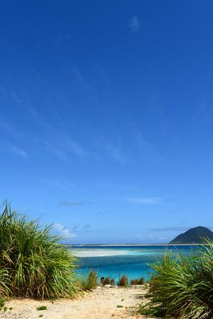 subtropical: Blue sky and subtropical plants of Okinawa Stock Photo