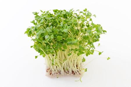 Radish sprouts Foto de archivo