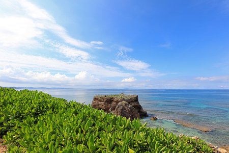 subtropical plants: Summertime at the beach Stock Photo