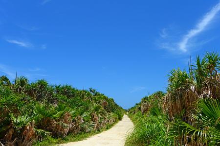 subtropical plants: Beautiful subtropical Okinawa