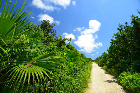 Summer sky and the green of the Okinawa subtropical plants 免版税图像