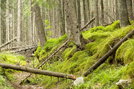 felled: Beautiful wild summer forest with felled trees