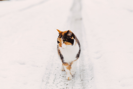 redheaded: Beautiful fluffy red-headed cat standing beside the snowy road outdoor in winter, copy space Stock Photo