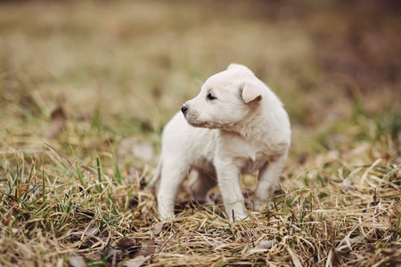 roofless: Cute white roofless puppy standing on the tree in field Stock Photo