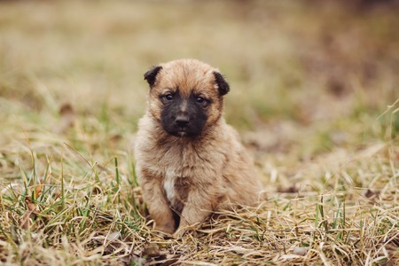 roofless: Cute sad stray puppy sitting on the tree in field Stock Photo